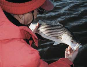 Learn to track lake norman 39 s winter striped bass in north for Lake norman bass fishing
