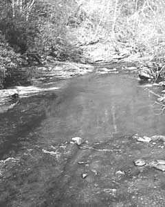 Big Snowbird Creek that feeds Santeetlah Lake in the Nantahala Forest is noted for its striking remoteness and fine Appalachian brook-trout fishing.