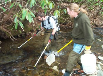 Biologists with the N.C. Wildlife Resources Commission search for trout and other inhabitants of western N.C. streams and rivers by hiking and 'electrofishing.'