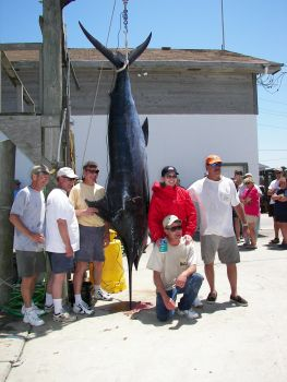 This is the 563 pound blue marlin caught by the M & M.  The angler, Rick Ford is on the far right, mate Joe Smith is kneeling and M & M owners Miles and Mary Datesman are beside the marlin.