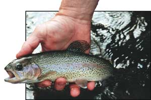 The Pigeon�s West Fork offers 5 miles of hatchery-supported water and 2 miles of delayed-harvest water, each well stocked with rainbows, browns and brook trout.