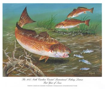 A red drum was chosen as the first official print of the N.C. Marine Conservation Fund and was painted by noted N.C. wildlife artist Duane Raver.