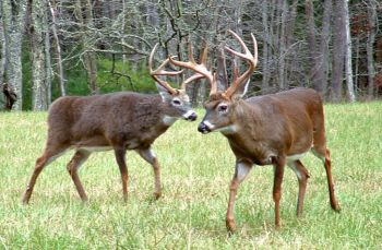 A bill by a state senator would end bag limits statewide for white-tailed deer and add two weeks to the season, effectively taking management out of the hands of the N.C. Wildlife Resources Commission.