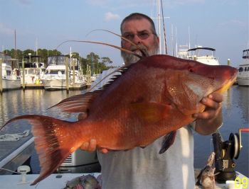 While not everyone will have the opportunity to catch a hog snapper like the one held here by Capt. Butch Foster of Yeah Right Charters in Southport, everyone can fish free in all N.C. waters on July 4.
