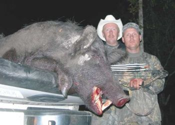 "Scott Kazmierczak (right) displays a 350-pound sow wild pig he downed with his archery equipment while hunting with Mack Moore of ""Dirt Road Outfitters"" in southeastern N.C."