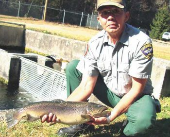 A hatchery worker displays one of the trophy-size brook trout regularly stocked in Cherokee Enterprise Waters.