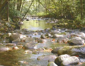 Streams with heavy cover are the best places to fish during hot weather conditions.