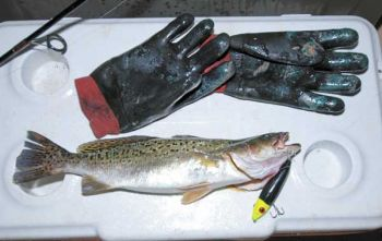 Gloves will help keep an angler�s hands warm during a wet, cold night of speckled trout fishing.