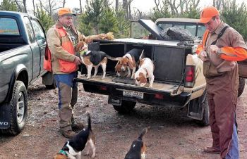 Briar-resistant outer clothing is a must for hunters who chase beagles and cottontails through their favorite haunts.
