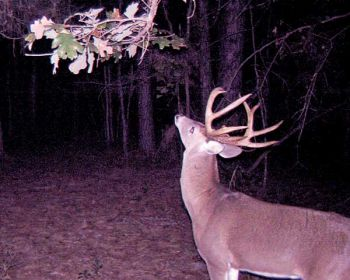 Post-season scouting trips can give deer hunters great insight into how that big one got away, and moving stands shortly after the season is over will help you avoid bothering big bucks closer to the opening of the season.