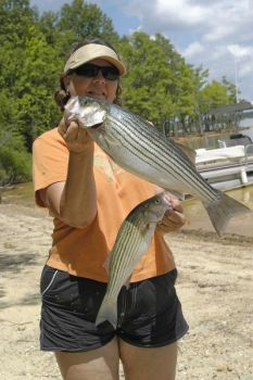 Anglers are having fun with Roanoke River striped bass near Welson and Roanoke Rapids as the spring spawn peaks the next two weeks..