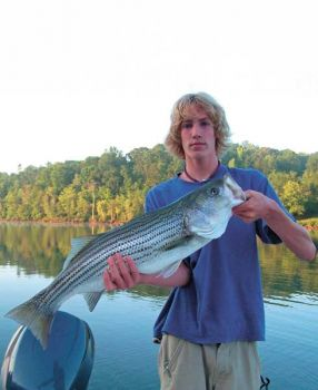 The river section of Lake Hickory, from the Rt. 321 drive to Rhodhiss Dam, produces a lot of big stripers in the spring.