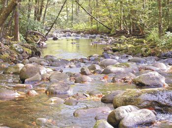 Brown and brook trout seek out tributaries of larger streams such as Little Santeetlah Creek when looking for spawning sites in the fall.