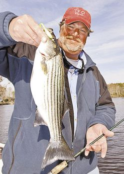 Gary Dubiel used a soft-plastic bait to catch this striper out of deep water in the Neuse River.