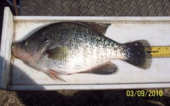 Nashville's Tracey Smith caught the pending state-record white crappie March 8 while fishing with a buddy on Tar River Reservoir.
