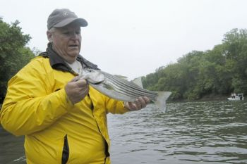 Striped bass fishing is about to hit full stride at the Roanoke River.