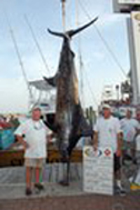 An 883-pound blue marlin landed on Monday broke the tournament record by more than 50 pounds and leads the Big Rock Blue Marlin Tournament through two days of competition.