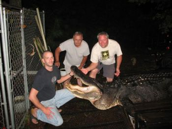Trevor King, Ray Mareno and Matt Mareno took this enormous alligator from the Lion's Beach area of Lake Moultrie on Sept. 28.