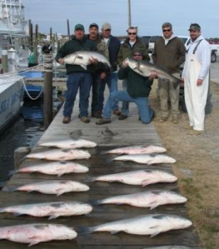 Striped bass fishing out of Oregon Inlet is producing limits for every boat, according to an OIFC representative.