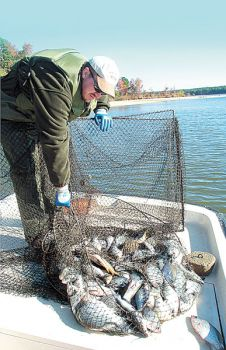 Hotspots for cold crappie carolina sportsman content la for Mdwfp fishing reports