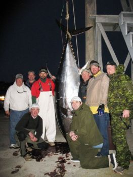 A state-record bluefin tuna was landed Saturday (March 12) off Oregon Inlet. To the left of the tuna (from left to right) are Capt. Ned Ashby, Virginia's Kenny Hines, Sea Breeze mate George Cecil, kneeling on left is Keith Allen of Virginia. To the right of the tuna (left to right) are Minnesota's Craig Allen (kneeling), Virginia's Lee Thacker, Virginia's Corey Schultz (who landed the big fish) and Pat Hughs of Minnesota.