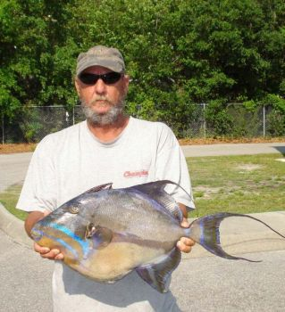 Angler Tim Cox set the North Carolina state record for queen triggerfish when he landed this 10.34-pound brute May 22.