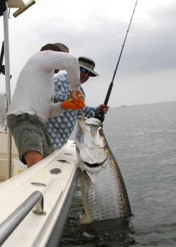 Chumming and using extremely fresh cut bait are two keys to hooking up with an acrobatic Pamlico Sound tarpon.