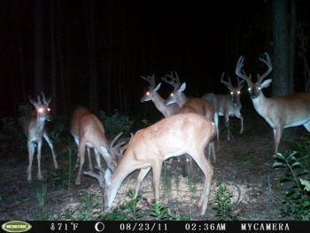 New NorthCarolinaSportsman.com user jonnynitro won the first round of the 2011 Trail Cam Contest with his photo of a large bachelor group of bucks.