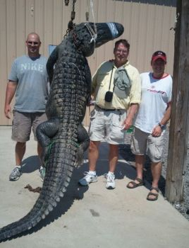 Lacy Blankenship, center, teamed with sons Cory and Lacy Jr. to take this 11-foot Lake Moultrie gator - after it charge the boat during the fight.