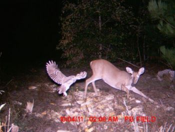 NorthCarolinaSportsman.com users named this photo as the winner of the monthly Trail Cam Contest.