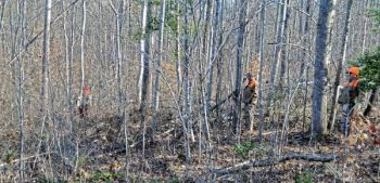 Brush piles and tree laps are good places to check as rabbits like to sit in that type of cover near a food source.