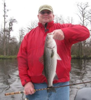 Striped bass that school in winter in the Neuse River near New Bern are providing consistent action for anglers.