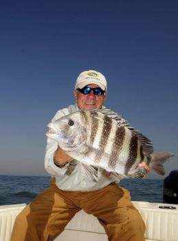 Sheepshead are much more aggressive feeders around reefs and wrecks in the ocean than they are the rest of the year around docks and rocks in creeks and rivers.