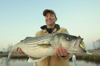 The spring spawning run up the Roanoke River is the best-known striper fishery in North Carolina, but late-winter staging fish can be hard to beat.