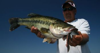 Lunker bass are on the move this month from deep water to the shallows, becoming active and more likely to make a mistake and swallow your lure.