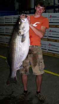 Tyler Shields' 66-pound striper was 47-1/2 inches long and 35 inches in girth.