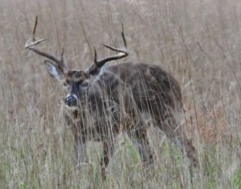 North Carolina hunters killed more than 173,000 deer last fall, the third-highest harvest on record.