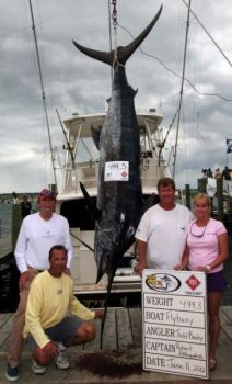 The crew of Flybuoy out of Charleston, S.C., weighed in this 499.3-pound blue marlin on Monday's first day of the Big Rock Blue Marlin tournament. Had the fish weighed 500 pounds, it would have earned a bonus of almost a quarter-million dollars.