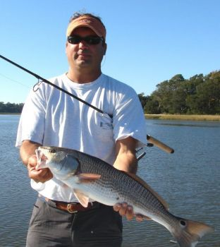 Guide Mark Stacy said redfish are really working over finger mullet that are heading out of the marshes.