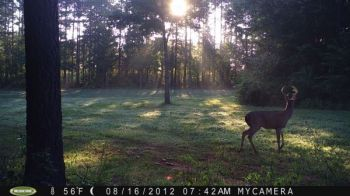 'Dawn of the Deer' won NorthCarolinaSportsman.com's trail camera contest for August.