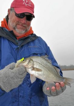 Chunky white perch are always hungry at Lake Norman, but fishing has been especially good lately.