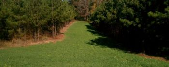 Keep your cool-season food plots green with an application of nitrogen so deer will get plenty of winter nourishment.