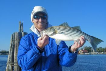 This Pamlico River striper is typical of the �resident� fish that stay in the river and Pamlico Sound almost year-round.