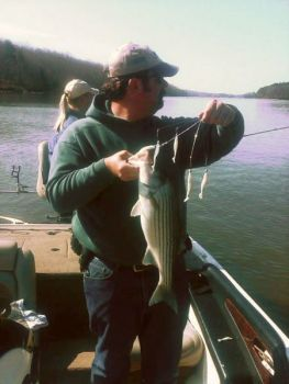 Lake Norman anglers are catching striped bass mixed with spotted bass and suspended in deep water.