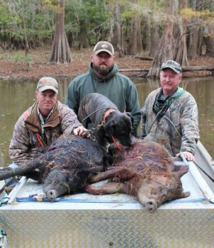 Hunting wild hogs with dogs can really put the barbecue and bacon on the table.