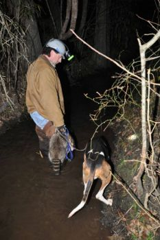 Raccoon hunters must deal with ditches of various depths and widths when following their dogs to a coon or at the end of a successful cast.