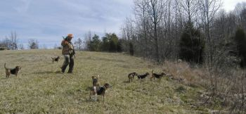Hunting rabbits is good exercise and can be lots of fun when dogs are well-trained, hunters are prepared and the habitat is good.