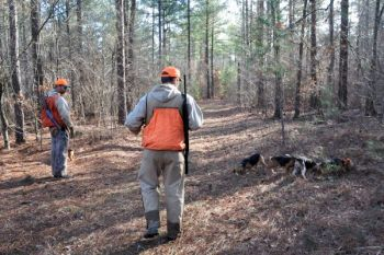 Many game lands across North Carolina provide excellent habitat for rabbits, with little hunting competition, once deer season ends.