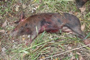 A hog-hunting trip among five friends last Saturday resulted in a fatality in the Ninety Six area.