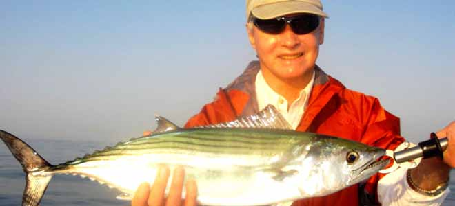 Bonito among nearshore species arriving off Wrightsville Beach